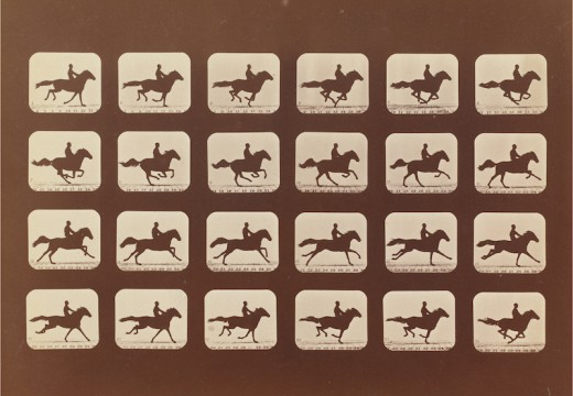 Horses. Running. Phyrne L. No. 40, from The Attitudes of Animals in Motion